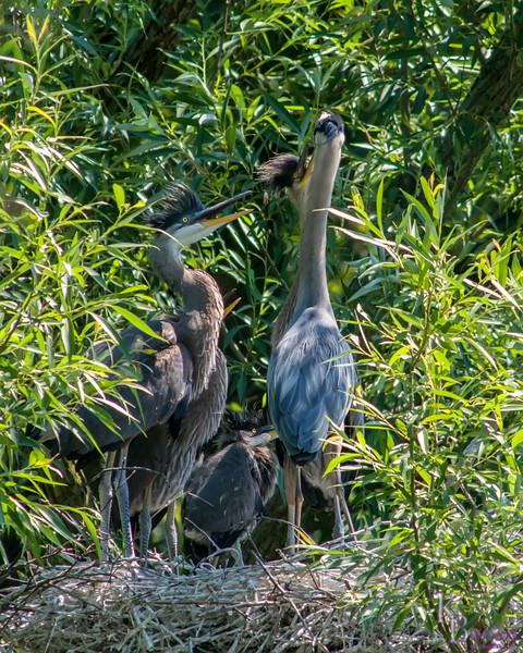 DSC_8962 heron's nest