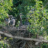 DSC_6878 heron's nest