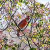 DSC_9149 cardinal