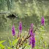 DSC_3698 wild flowers