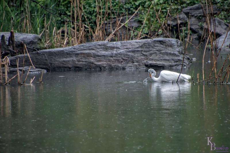 DSC_9148 hunting in the rain