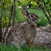 DSC_3911 bunny rabbit_DxO
