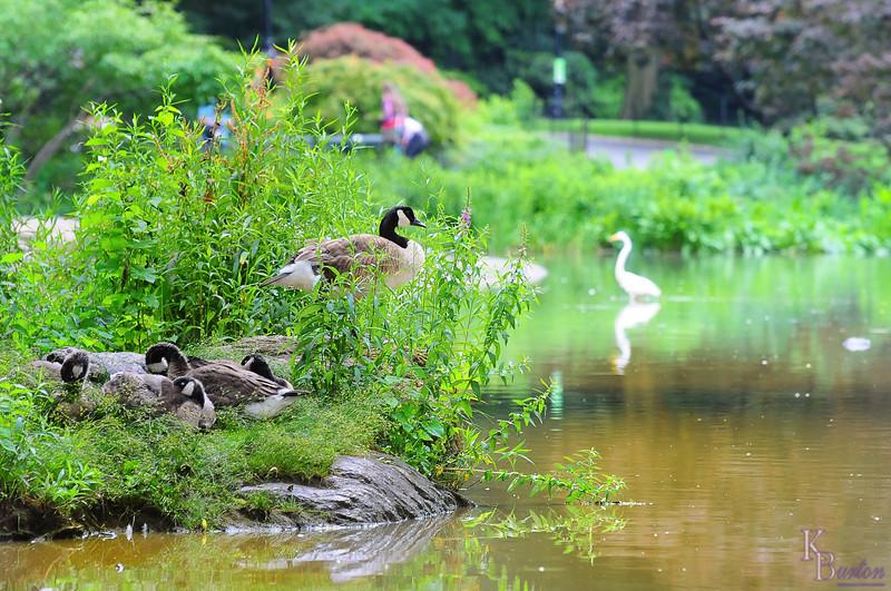 dsc_7719 summer scene at the pond