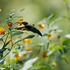 DSC_9607    the hummingbirds of Clove Lakes_DxO