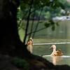 DSC_8729 Martling lake_DxO