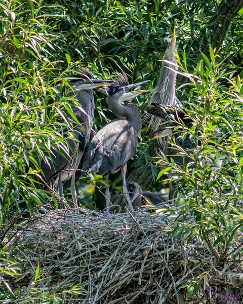 DSC_8904 heron's nest