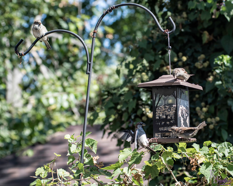DSC_6930 backyard bird feeder