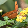 dsc_6774 the inhabitants of Butterfly Gardens