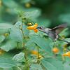 DSC_8517 the hummingbirds of Clove Lakes_DxO