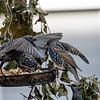 DSC_5693 backyard bird feeders