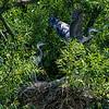 DSC_9927 heron's nest