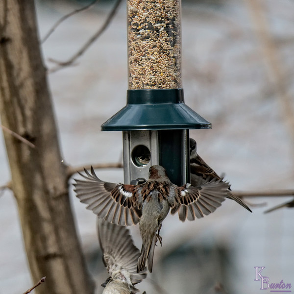 DSC_2690 backyard bird feeder