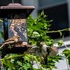 DSC_3043 backyard bird feeder