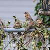 DSC_5513 backyard bird feeders