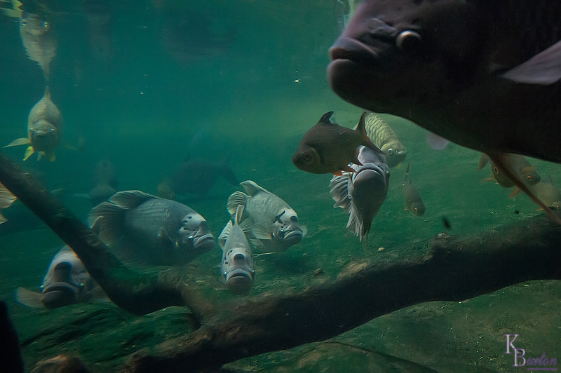 DSC_0637 underwater front row seat