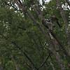 DSC_3197 rainy mornig at Wolfe's pond-TF