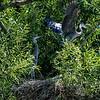 DSC_9910 heron's nest