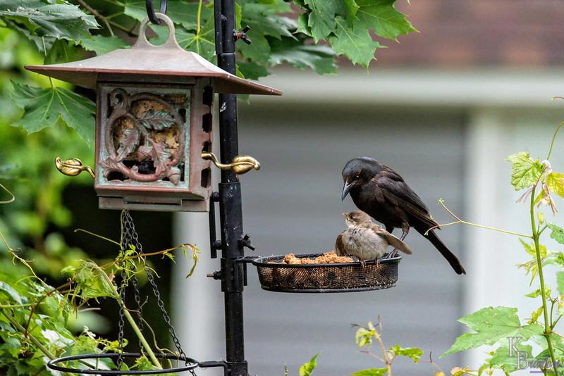 DSC_4708 backyard bird feeder