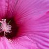 DSC_2482 think pink