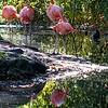 DSC_7142 flamingo's
