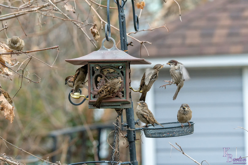 DSC_7548 backyard bird feeders