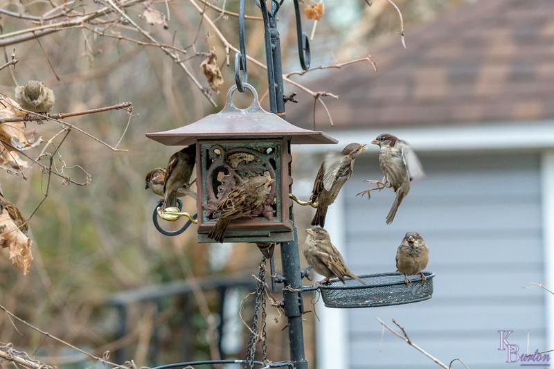 DSC_7548 backyard bird feeders