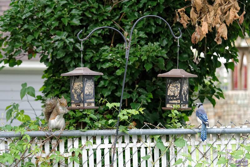DSC_6230 backyard visitors_DxO