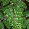 DSC_3877  Herb Gardens Wave Hill