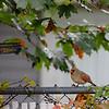 DSC_2373  backyard in the fall_DxO