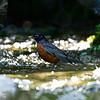 DSC_1293 bird bath