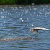 DSC_8076 tern catching breakfast_DxO