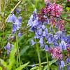 DSC_4051 Wild Gardens Wave Hill