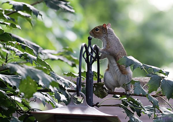 DSC_4431 backyard visitor_DxO