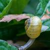 DSC_9481 snails pace