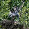 DSC_0814 heron's nest