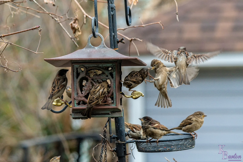 DSC_7517 backyard bird feeders