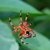 DSC_9490 building a web
