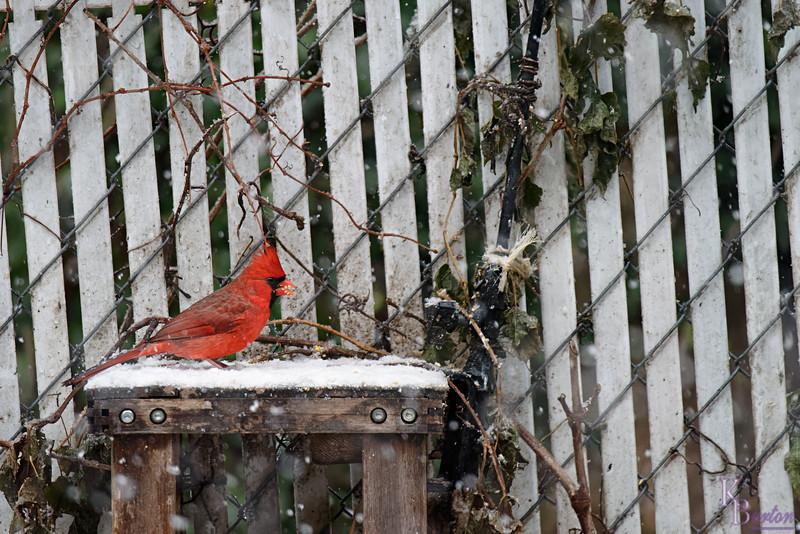 DSC_1328 backyard visitors_DxO