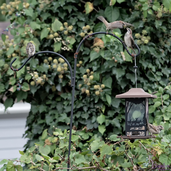 DSC_6881 backyard bird feeder