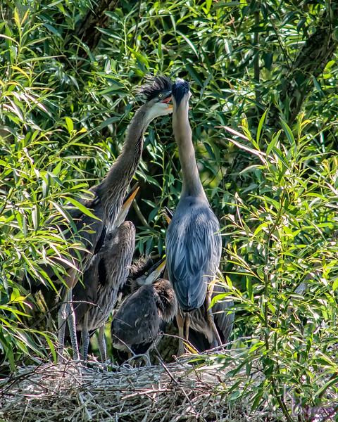 DSC_8959 heron's nest