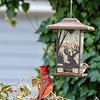 DSC_5677 backyard bird feeders