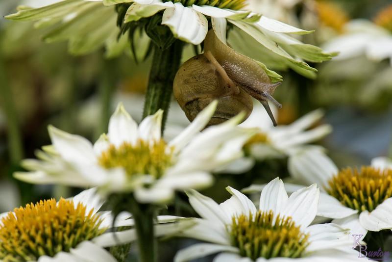 DSC_4570 a snails pace