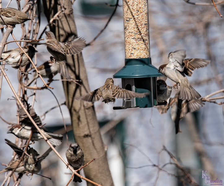 DSC_9508 backyard bird feeder