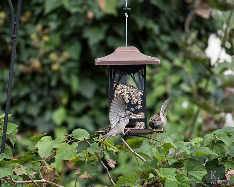 DSC_5909 backyard bird feeder