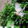 DSC_4617 backyard bird feeder