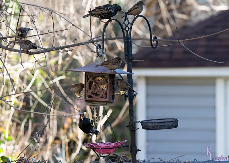DSC_3516 backyard visitors