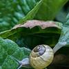 DSC_9487 snails pace