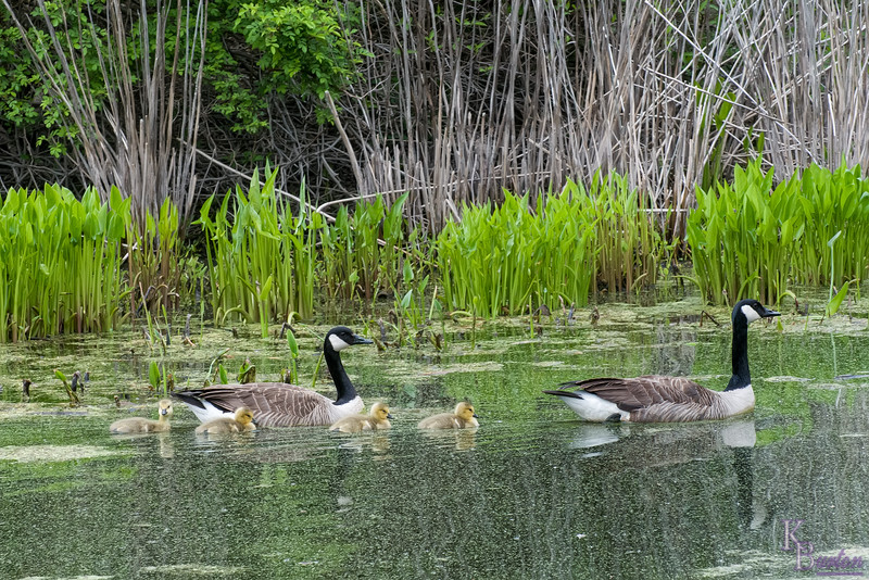 DSC_2932 spring time scene at Blue Heron park