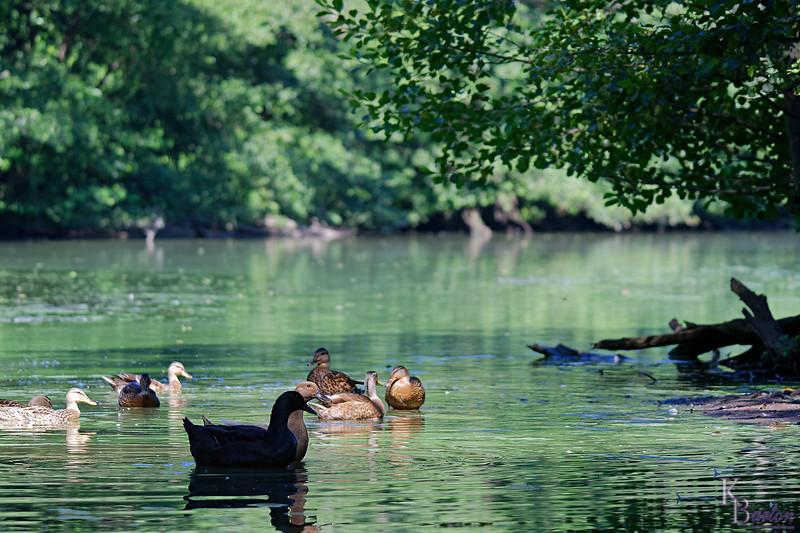 DSC_0393 summer scenes from Clove lakes_DxO