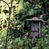 DSC_5743 backyard bird feeder